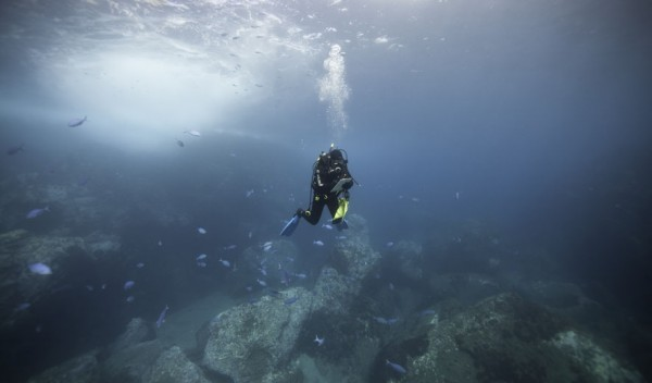 Clinton Duffy pauses to write notes as he swims along a transect near North Meyer Island counting Galapagos sharks and big fish such as spotted black grouper © Richie Robinson