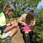 Mark and Emma McCool measuring a chick at the summit of North Meyer Island.