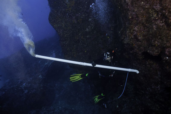 "Underwater vacuuming: collecting specimens with a long plastic pipe known as an ""air lift"" © Richie Robinson"