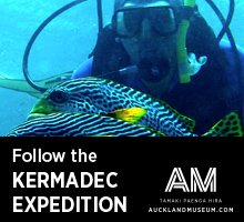 Follow the Kermadec expedition